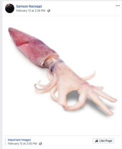 Screenshot of facebook post by Samson Racioppi on February 12th which shows a squid whose tentacles are photoshopped to be a hand making the okay sign.